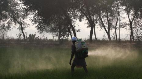 punjab pesticide spraying