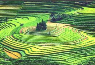 vietnam terraced fields